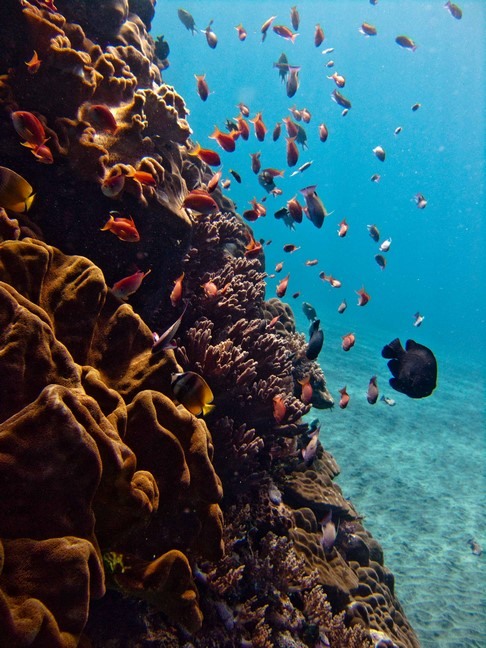the reef of mangrove nusa lembongan