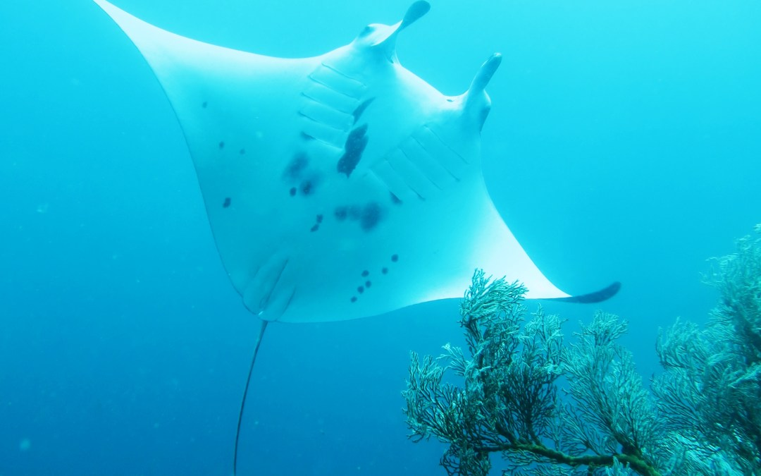 Day 5:  First manta ID and underwater in a whole new light