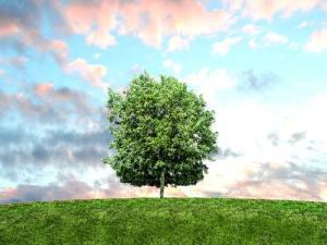 تحت ظل شجرة