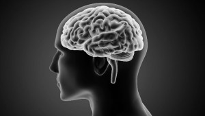 هل يدل صغر حجم الدماغ البشري على اقتراب انتقال السلطة؟