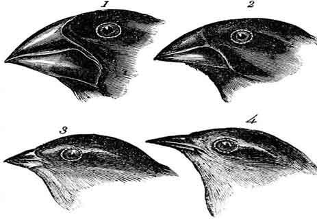 تطور الأنواع