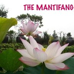 Mantifang: always in full bloom
