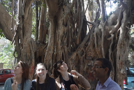 بعض الأجانب يلتقطون صورًا تذكارية بجانب الشجرة الخديوية