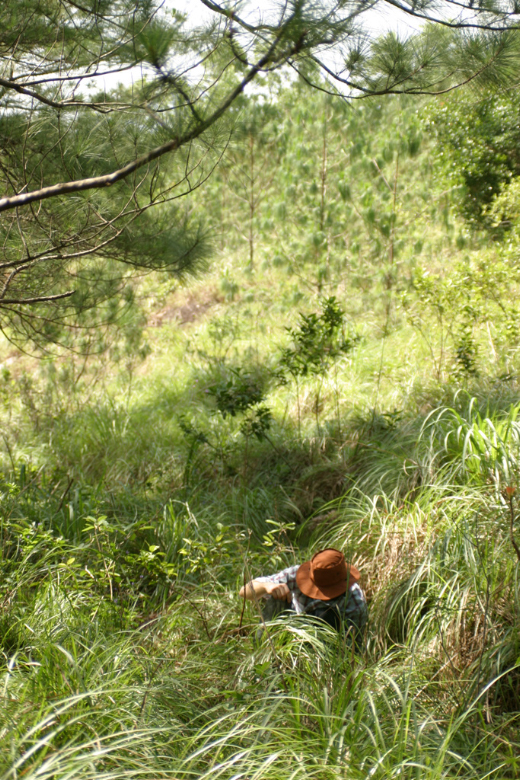 Pon Mudi highlands 1