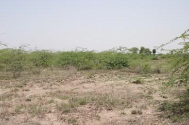 Tamil Nadu 4