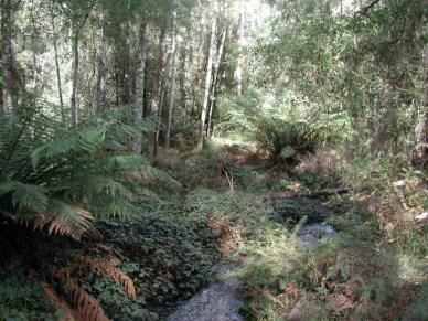 Tas rain forest1