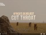 أشرس كائنات أفريقيا: منافسة شرسة | ناشونال جيوغرافيك أبوظبي