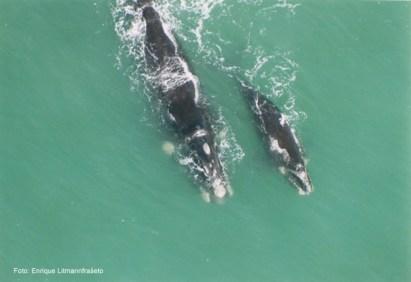 Imbituba (SC) - onde se pode ver a baleia franca com filhote