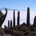 Isla Pescado, Salar de Uyuni