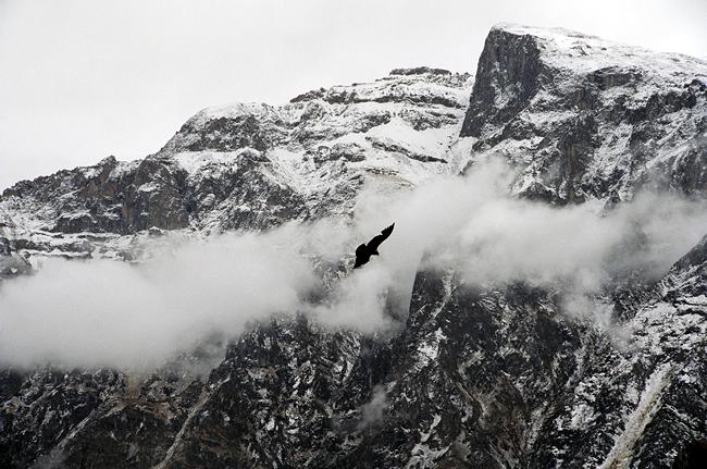 Condor, Valle del Colca, Peru