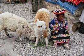 Criança com alpacas, Vale do Colca, Peru