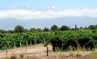 Vinícola próxima a Mendoza