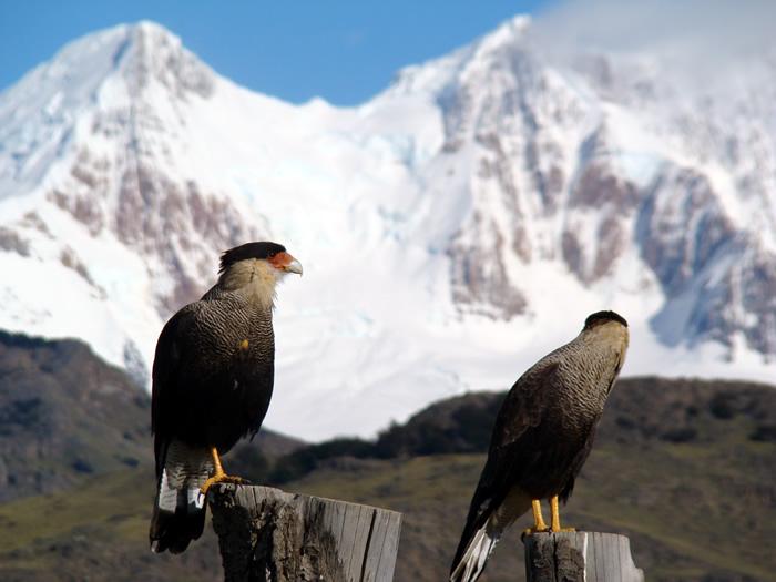 Patagonia Andina, fauna