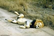 África do Sul, vida selvagem