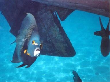 Abrolhos, Bahia, peixe frade