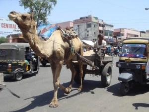 Rua de Jaipur, Índia