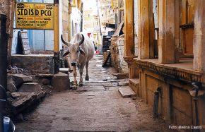 Ruela de Jaisalmer, Rajastão, Índia