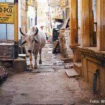 Rua de Jaisalmer