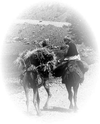 Camponês no Afeganistão