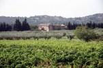 Provence, França, vinhedos