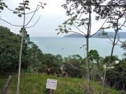 Vista do litoral, Ubatuba