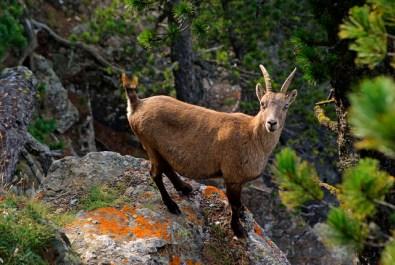 Fauna do Piemonte