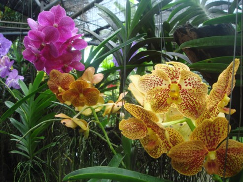 Orquidário de Chiang Mai, Tailândia