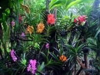 Orquidário de Chiang Mai, na Tailândia