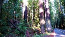 Califórnia-sequóias-gigantes-Foto-Christopher-Bulle