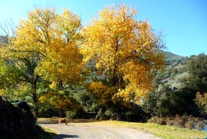 França, Corsega, estrada no outono