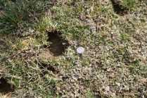 It may be a cliche, but the Henryville hail literally was golfball-sized—and larger. The hail-beaten ground looked as though it had survived a war.