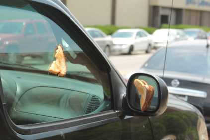 grilled cheese super glued to window