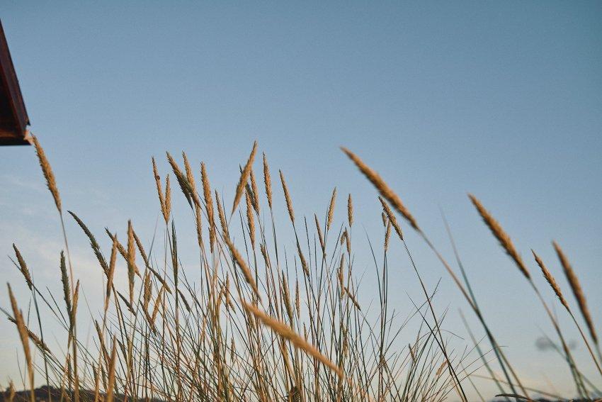dunas-costadamorte-hierbas-playa-barranan-arteixo-galicia
