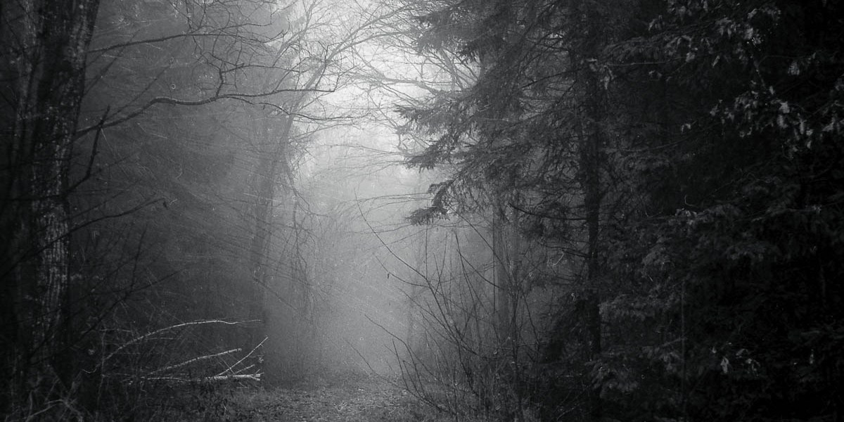 Nebel im Wald / Kodak TMAX 400