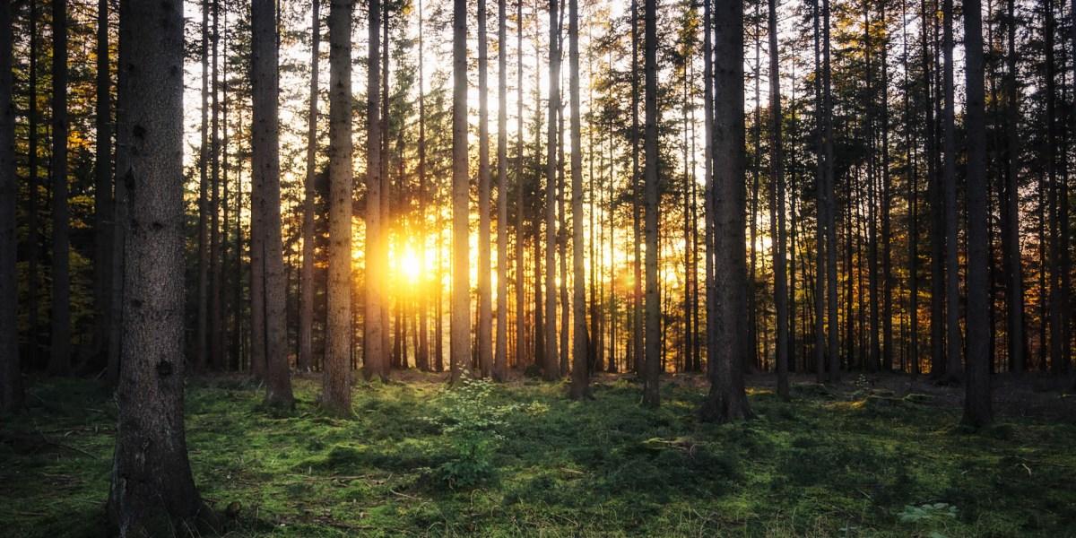 Wallpaper Sonnenuntergang im Wald