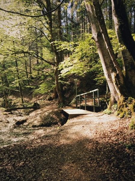Waldschmidtschlucht Tutzing im Frühling
