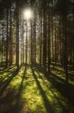 Sommersonne im Wald