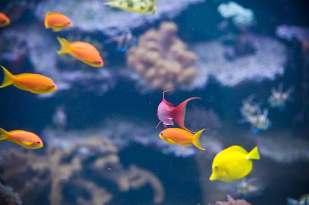 Fisch-Schwarm