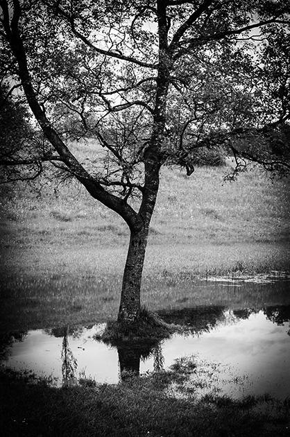 Landschafts-Fotografie; im Wasser stehender Baum in der berner Elfenau