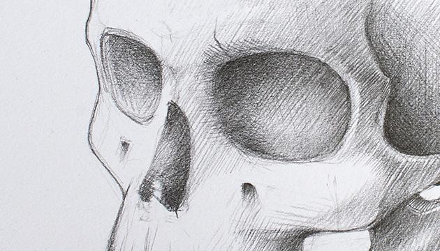 Schädel Illustration Beitragsbild
