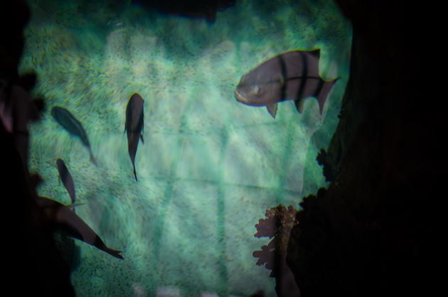 Fische in einem Nebentrakt des Ozeaneums von Lissabon