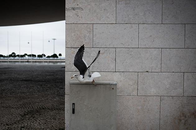 Expo 98, Möwe beim portugiesischen Pavillon