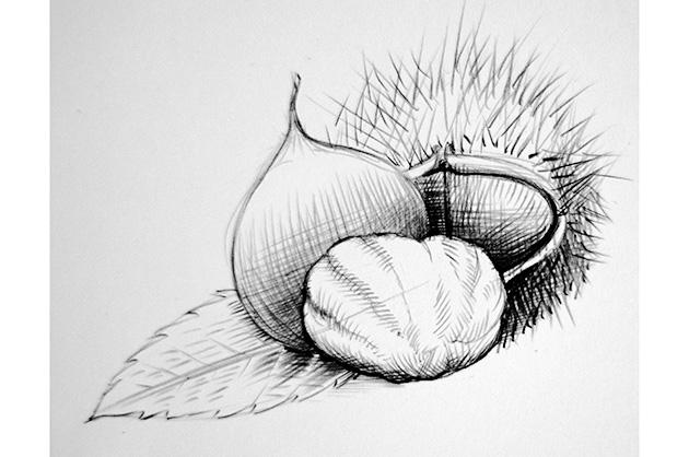 Verpackungsdesign von Torta per Tutti; Bleistift-Skizze einer Edelkastanie