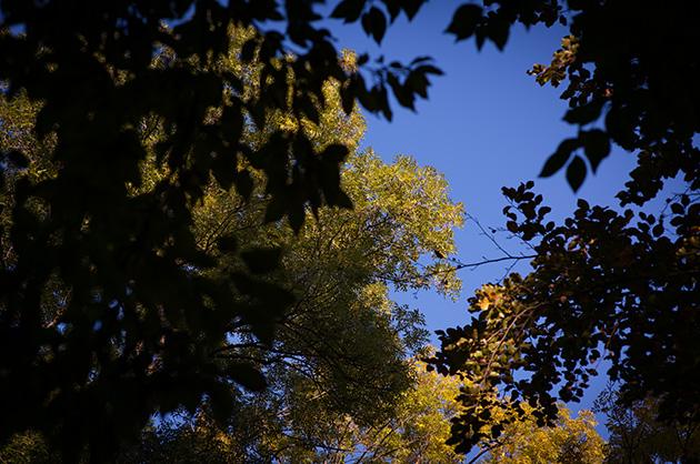Herbstliche Baumkronen und Blätter vor dem blauen Himmel.