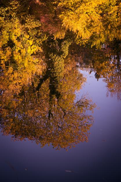 Egelsee Bern, Baumspiegelung auf dem Wasser