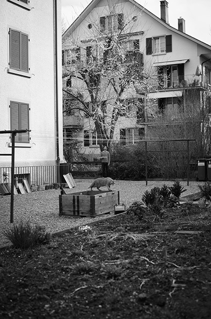 Garten an der Mindstrasse im berner Murifeld