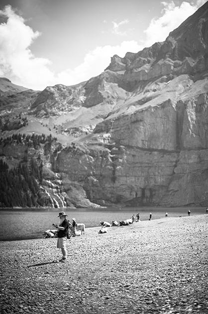 Tourist am Ufer des Oeschinensees, im Hintergrund ruhende Kühe am Seeufer.