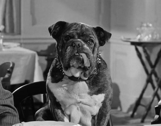 El perro que se sentaba a la mesa del capitán y, más tarde, fue arrojado al mar por un par de mocosos.