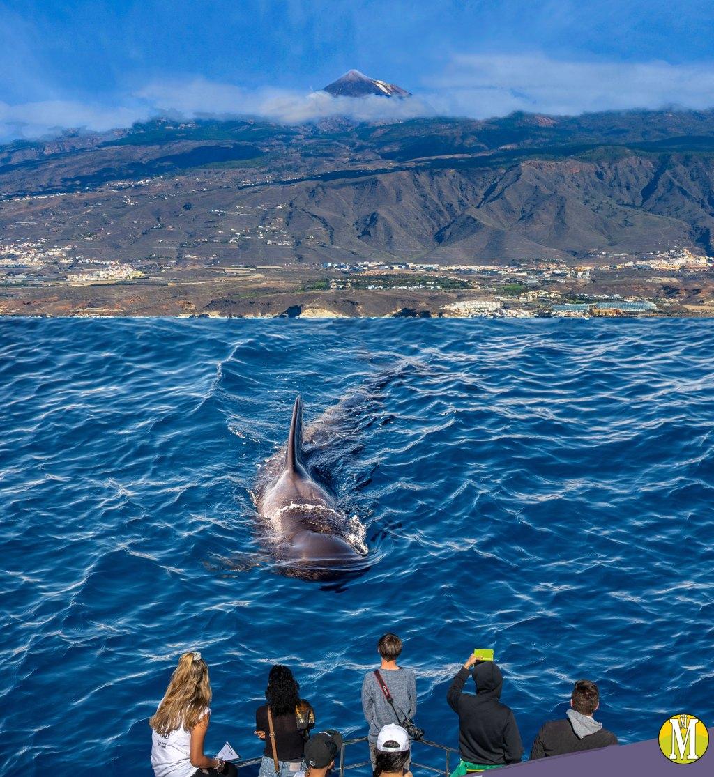 La ballena fantástica