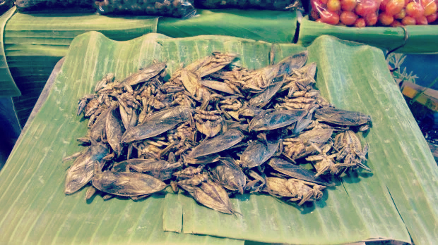 Edible insects crickets
